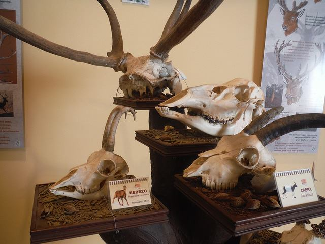 Museo da Natureza de Ferrol